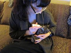Nursing Lefty back to health (Jimmy Legs) Tags: street cats kitten feeding lefty bushwick neonatal bottlebaby