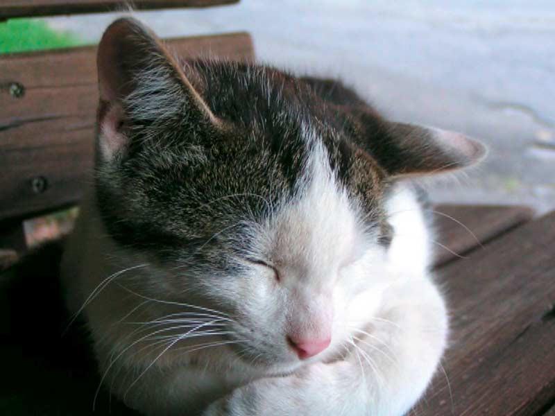 Kirschblütenhof - Katze