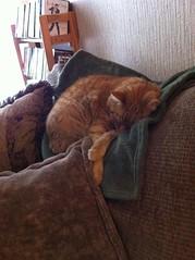 Sleeping Murphy