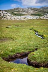 Plateau du Coscione (Corse) (Laurent VALENCIA) Tags: wild france green river pig spring corse bull vache herbe sauvage rivier plateauducoscione coscione