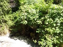 3ème et dernière vasque des villageois : la trouée du sentier est bien visible