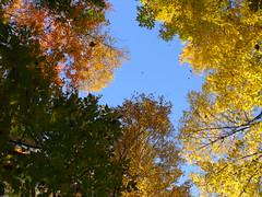 look up and be thankful-1 (dmixo6) Tags: thanksgiving autumn canada nature beauty gravenhurst dugg dmixo6
