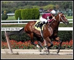 Tapizar and Corey Nakatani (EVENTOF THE YEAR PHOTOS) Tags: horseracing thoroughbreds belmontpark xodo tapizar