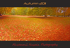 Autumn 2011 (Muzammil (Moz)) Tags: uk london hydepark folliage moz carpetofleaves canon60d october2011 muzammilhussain fall2011 autumn2011