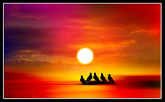 Sunset4 (Senior Graphic Designer) Tags: sunset sky sun art texture nature birds illustration digital painting design photo pigeon background creation
