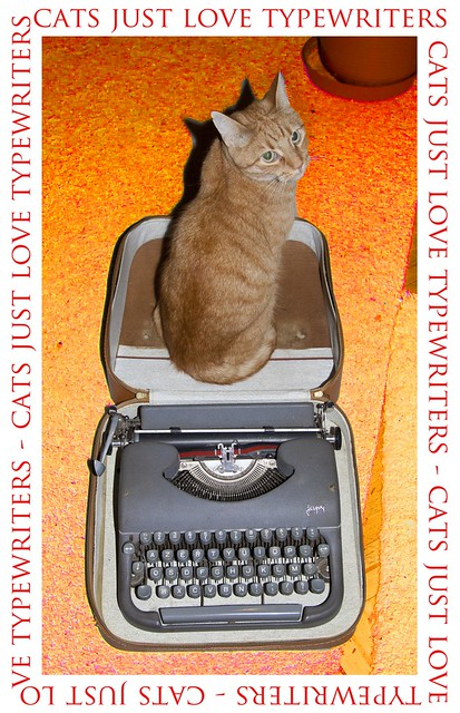 Cats just love typewriters