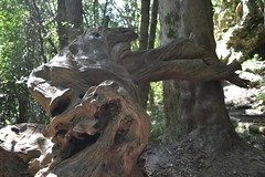 Tree contortions Photo