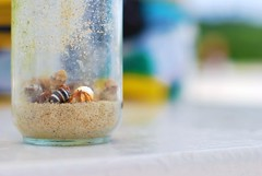 A collection of hermit crabs from Okinawa (funkgirldeluxe) Tags: glass japan sand bokeh jar okinawa crabs hermit
