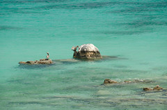 Sea Gulls in the Water at St. John (Carl's Photography) Tags: bird water rock iso200 nikon turquoise stjohn tropical caribbean f80 tropics virginislands usvi virginislandsnationalpark stjohnusvirginislands 18200mmf3556gvr 1125sec d7000 1125secatf80 nikond7000 usvirginislandsusvi 2011stjohnvacation littlelameshurbaystjohnusvirginislands