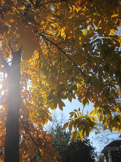 autumn7880