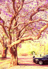 Dancing branch (Artlyshot) Tags: brisbane jacarandatree moogerah artlyshot