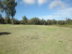 Turtle Bay Colf Course 319
