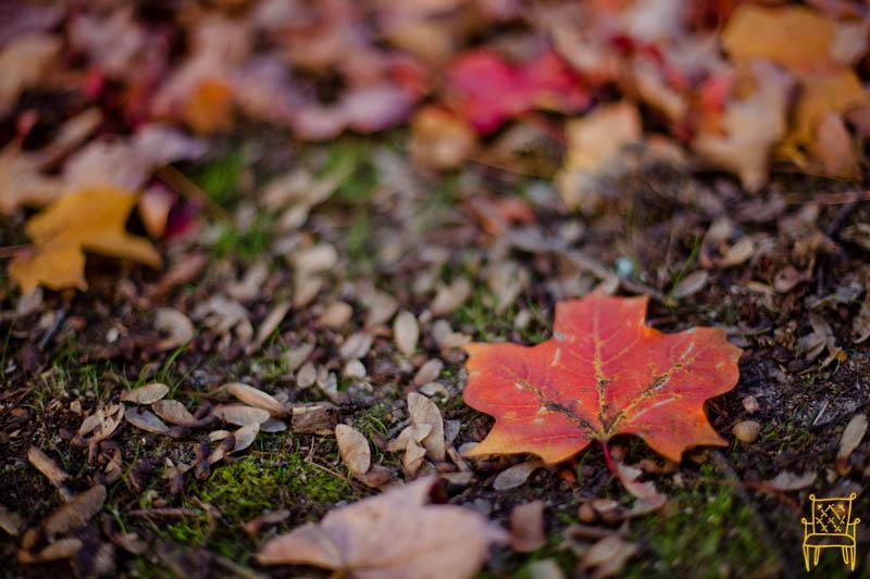 Leaves_0007