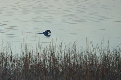 River Otter DSC_6858