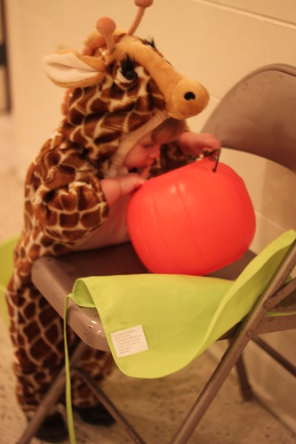 Giraffe Raiding the Candy Pail
