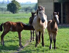 Caballos (-Patt-) Tags: horses naturaleza nature caballos libertad freedom campo animales