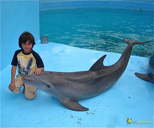 Befriending Dolphins at National Aquarium in Havana Cuba