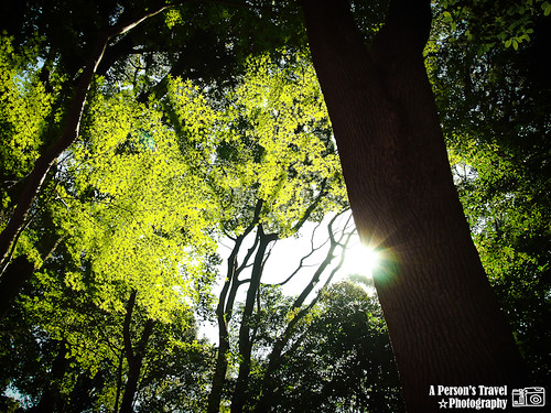 2011Kyoto_Japan_ChapThree_14