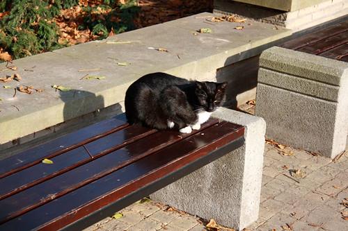 Cemetery cat!