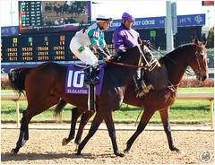 Eldaafer (Shazstock) Tags: horse black cup grey bay mare racing chestnut colt stallion thoroughbred equine filly breeders