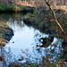 Five Rivers - Delmar, NY - 2010, Nov - 06.jpg by sebastien.barre