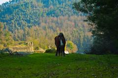 Easy Boy! (NunoVicente) Tags: santa horse portugal nature rio river landscape natureza paisagem dao cavalo scd waterscape viseu comba do