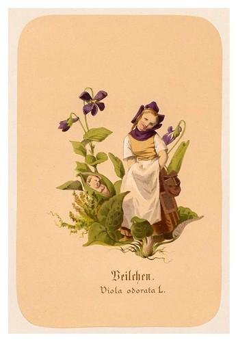 009-Violetas-Illustrirtes Kräuterbuch –Aquarelle- 1870-Adolf Schroedter