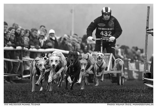 IFSS Schlittenhunde Weltmeisterschaft in Borken geschafft: Michael Tetzner aus Burg, Schleswig-Holstein