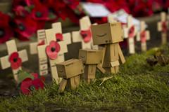 Danbo rememberance day 1 (Jody Walmsley) Tags: flower army toys death blood war day poppy rememberance danbo