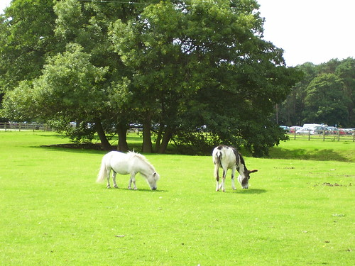 Shugborough Hall - donkeys