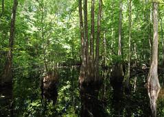 Turkey Creek Hammock Preserve