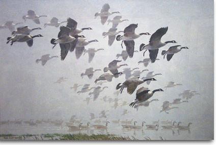 Sir Peter Scott_geese