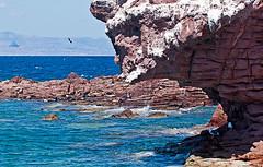 LosIslote4776 (gerb) Tags: ocean sea water topv111 rock mexico island cool gull wildanimal sealion seaofcortez tvp d300 70200mmf28gvr losislotes