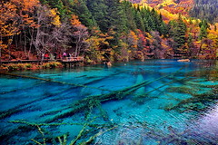 Criss-Cross (nawapa) Tags: china travel autumn lake flower color tree landscape ancient view five scenic valley fallen trunk sichuan jiuzhaigou 2011 nanping nawapa