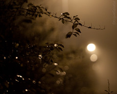 foggy night (katja guenther) Tags: autumn fall fog nebel herbst nightshots 2011