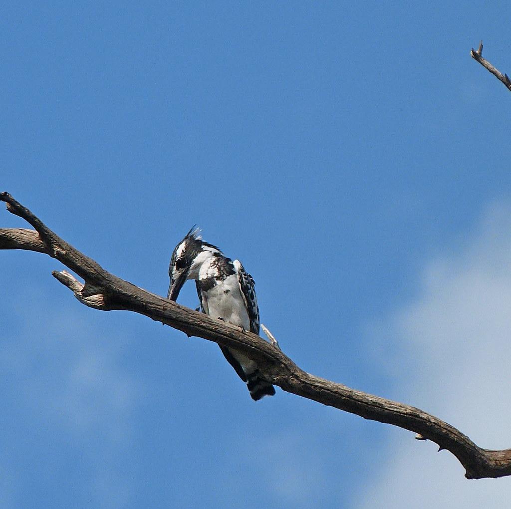 01-10-2011-birds-yup-still-teasing-u