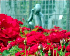 Rose garden at Hluboká (tewhiufoto) Tags: flowers flower colour nature gardens digital canon garden photo nikon flickr bloom dslr hluboká southbohemia frauenberg flowersandgardens hlubokánadvltavou zámekhluboká canonixus95is tewhiu schlosseshluboká