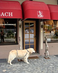 Mommy's shopping inside (CameliaTWU) Tags: dog pet reflection shop switzerland cobblestone gstaad