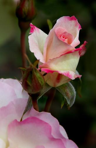 Primavera 14