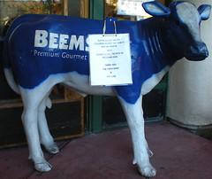 & THE COW (ron_toad) Tags: blue urban sex berkeley words gourmet calf artifact premium beemster foundpoetry beems tyingoneon foundpoem notquitepurple halfstein theycallitthatjerseybounce