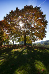 pleasures of autumn (Tupilak79) Tags: autumn light sky orange sun tree green fall nature grass canon soleil europe perspective sunny wideangle 7d sonne arbre baum luxemburg 1022 echternach geotagges autumnhues