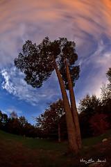 _MG_2970 (May Elin Aunli) Tags: nightphotography sunset lighthouse norway night norge natt grimstad nattfoto torungen hasla haseltangen