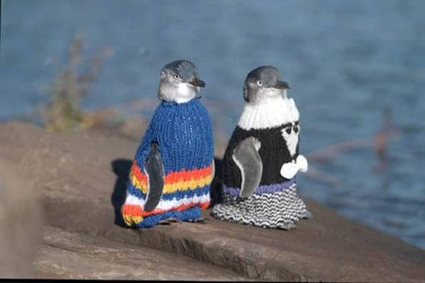 penguin_sweaters