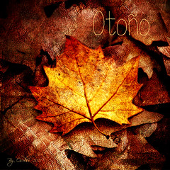 Otoo (osolev) Tags: madrid autumn espaa hoja photoshop square golden leaf spain europa europe ps otoo textured casadecampo cs4 dorados cuadrada coloresotoales osolev cobrizos