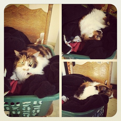This is what happens if you walk away from a basket of laundry around this place. #cat