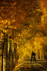 Silk Road #10 (Jonathan Kos-Read) Tags: china road autumn fall bike lost alone chinese autumnleaves motorcycle silkroad nomad lonely  gansu shaanxi outpost yellowleaves goldenratio  atx828afpro tokinaaf80200mmf28 tokina80200matxprof28 deletedbydeletemeuncensored