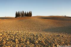 Classic Cypresses (Corsaro078) Tags: landscape tuscany cypress siena toscana paesaggio colline cretesenesi d90 cipresso sanquirico