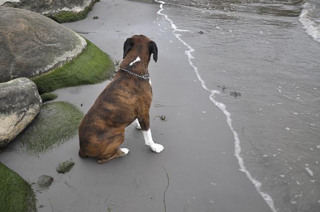 green beach 3