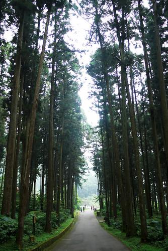 20111021_153044_溪頭