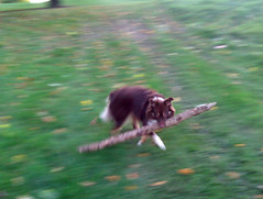 Fetching stick